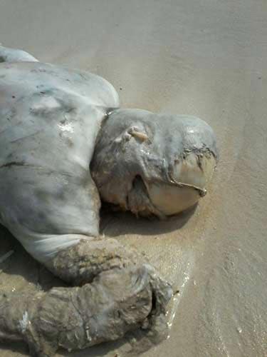 Yémen: le massacre contre les pêcheurs d'al-Hadida, nouvelle preuve de la barbarie saoudienne.