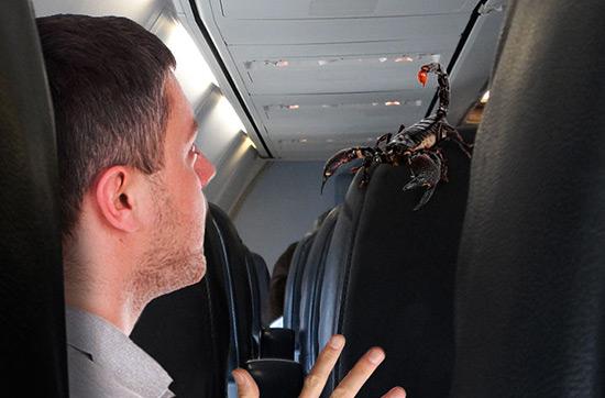 Un passager d'United Airlines piqué par un scorpion à bord d'un vol pour le Canada.