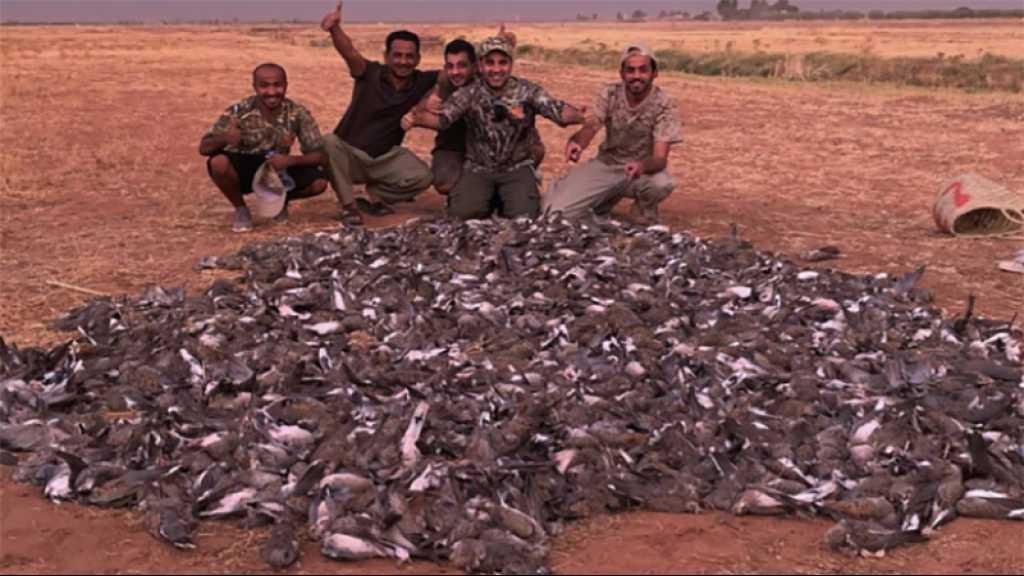 Les Marocains scandalisés par la chasse de 1.500 oiseaux en un jour par des touristes des pays du Golfe