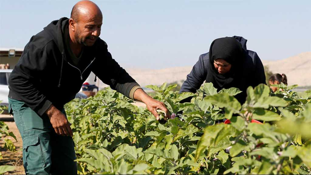 «Israël» bloque les exportations de produits agricoles palestiniens