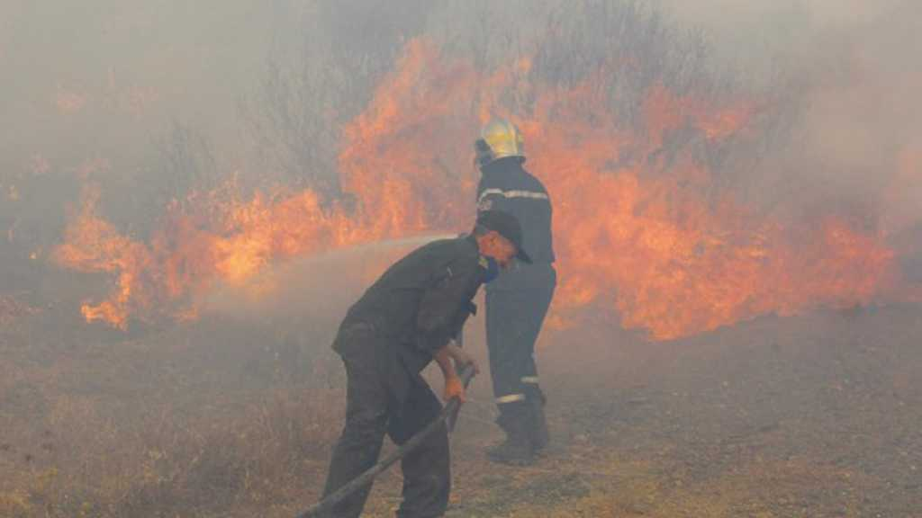 Incendies en Algérie: plus de 8.000 hectares brûlés, le président ordonne une enquête